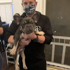 Ace French Bulldog