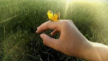 butterfly-4349345_1920.jpg