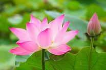 botanical-garden-2844202_640.jpg