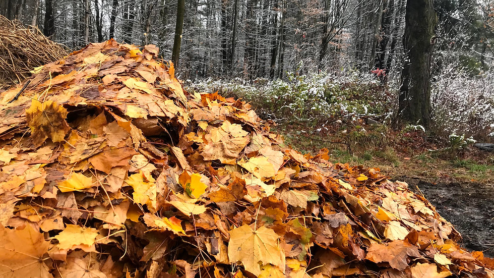 Leaf and yard clean up pick up