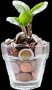 Money Plant.png