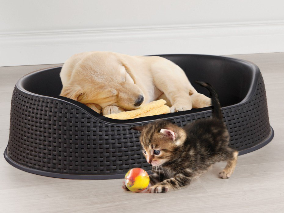 PET BASKET-2
