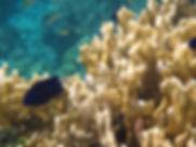 Korallenriffe lassen sich beim Schnorcheln bestens erkunden