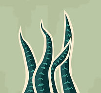 Inner_Compass_Co_Snake_Plant.jpg