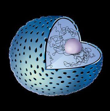 Partes del núcleo celular