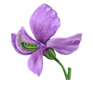 Flor de la arveja