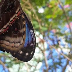 Loving the way Blue Butterflies match ou