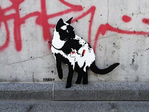 TABBY Cat vs Banksy Rat - Caught Red Handed