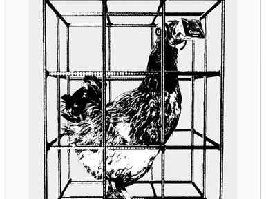 Virtual free range chicken