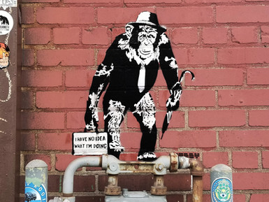 Working Chimp - I Have No Idea What Im Doing