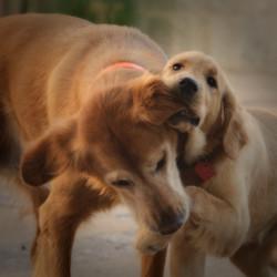 I got your ear