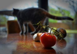 Tomato and the cat