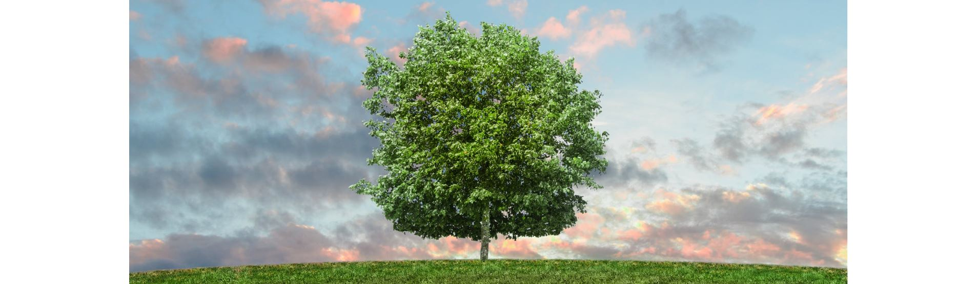April 24th – Arbor Day