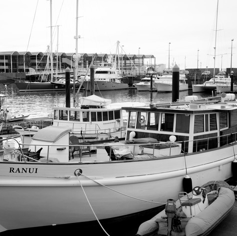 auckland new zealand harbor kim matlock
