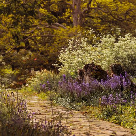 Location Ireland garden.jpg