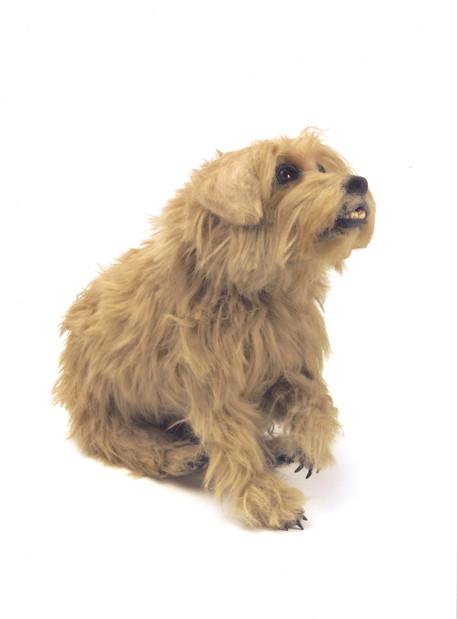 Mr Darcy Stunt Dog