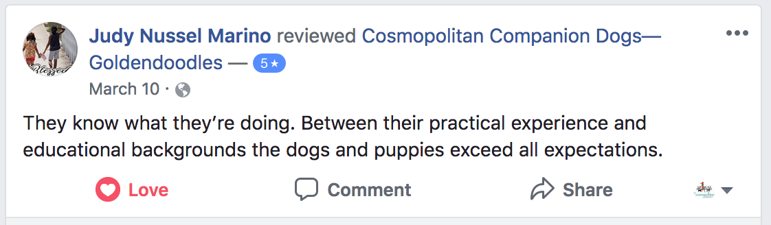 Cosmopolitan Companion Dog Review