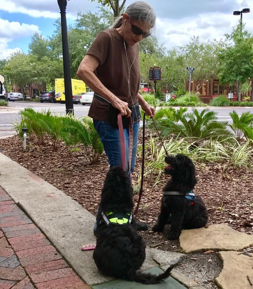 Goldendoodle training