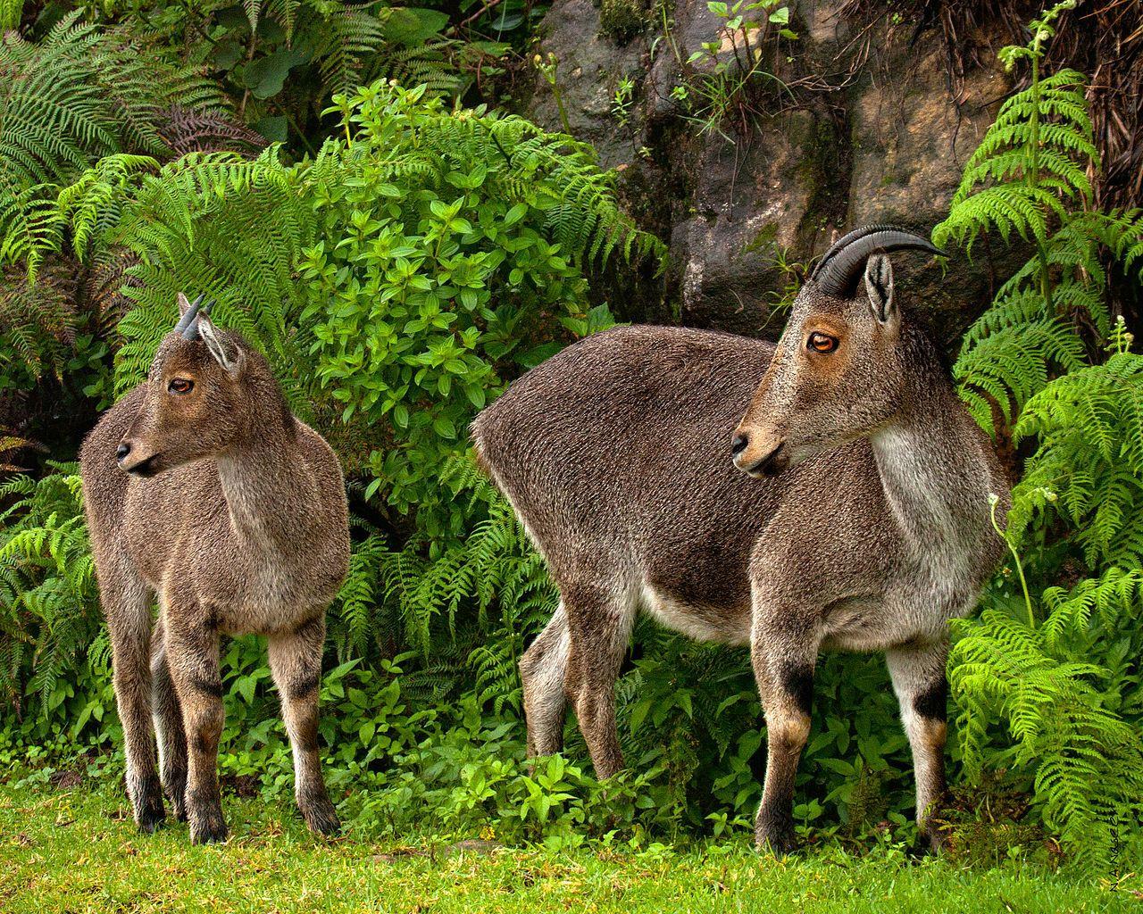 Chinnar wildlife sanctuary, kerala jpg