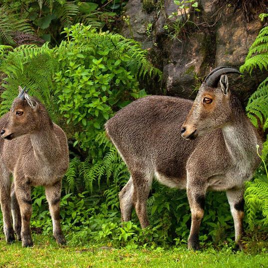 Chinnar wildlife sanctuary, kerala.jpg