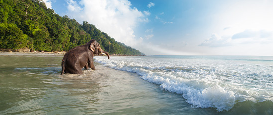 Elephant Beach, Havelock Beach, Andaman