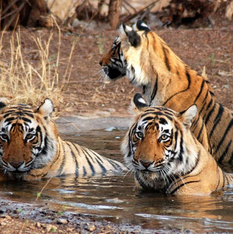 Corbett National park, Uttara Khand.jpg