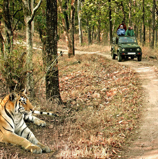 Kanha National park, Madhya Pradesh.jpg