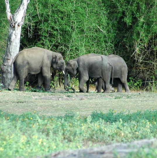 Bandipur National park, Karnataka.jpg
