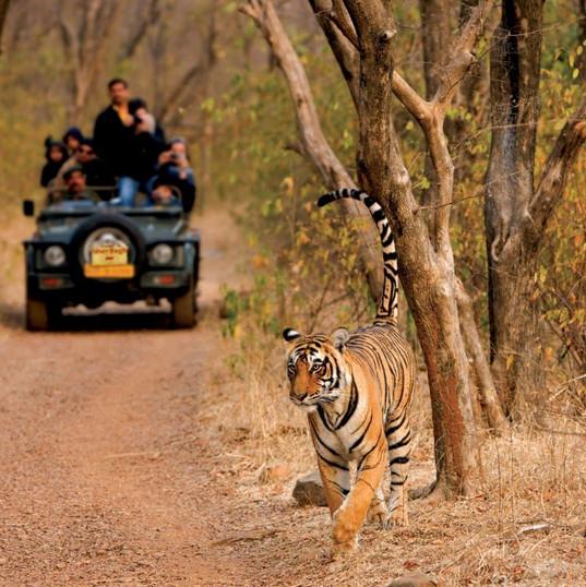 Ranthambore National park, Rajasthan.jpg