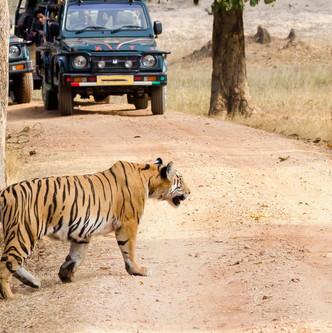 Pench national park, Madhya Pradesh.jpg