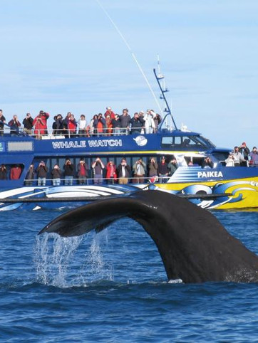 Kaikoura- Place known for whale watching tours