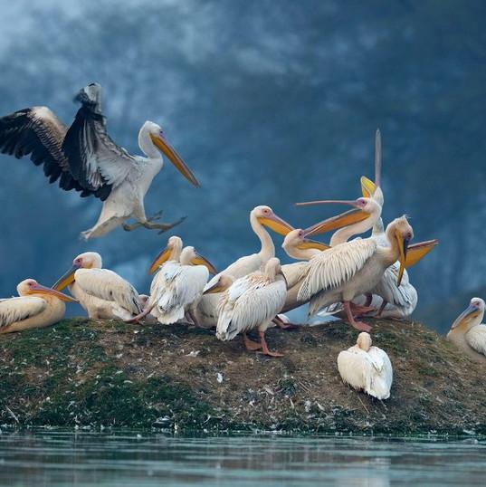 Keo Ladeo Ghana National park- Bharatpur