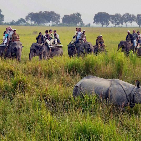 Kaziranga National park, Assam.JPG