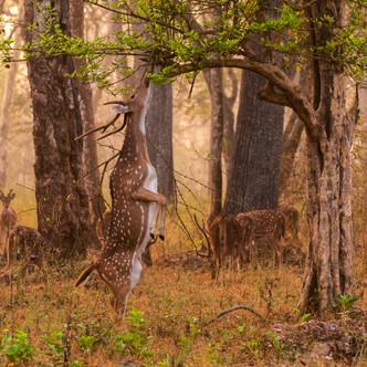 Nagarhole National park, Karnataka.jpg