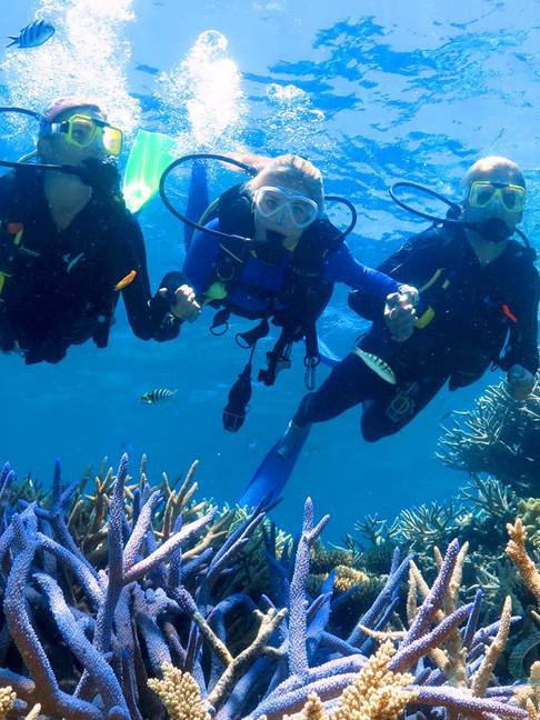 Great Barrier Reef- Scuba Diving