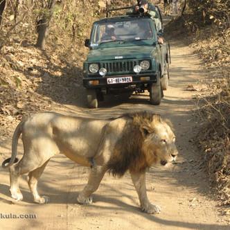 Gir National park and Sasan Sanctuary, G