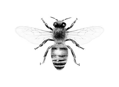 Bees: Survival Over Self