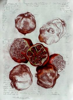 pomegranate613seeds.1.jpg