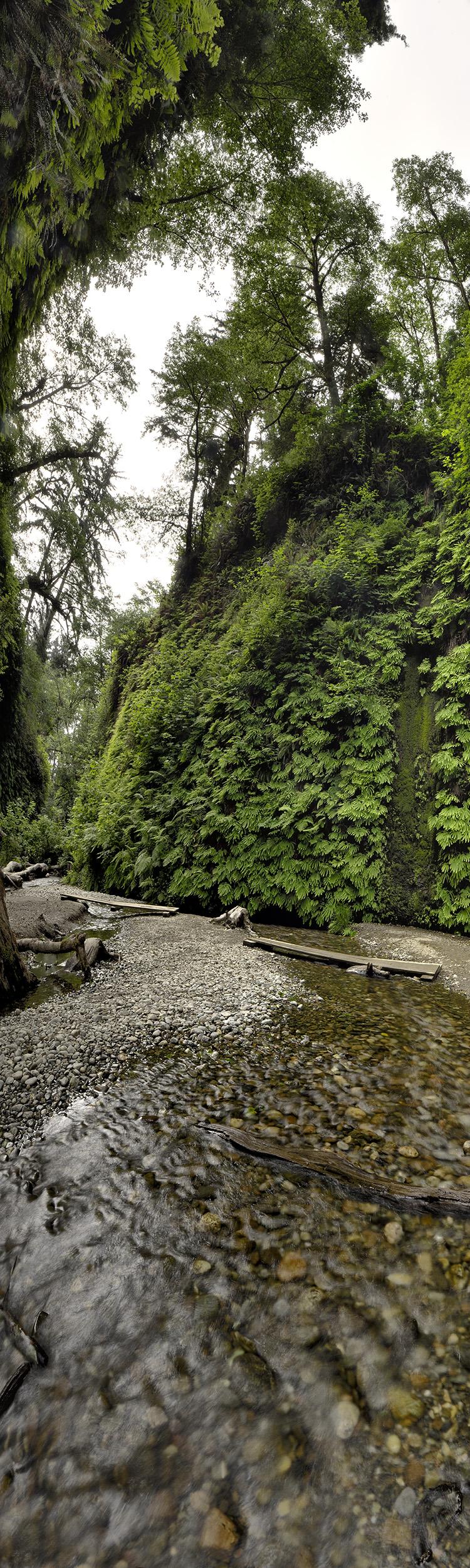 Fern Canyon #3