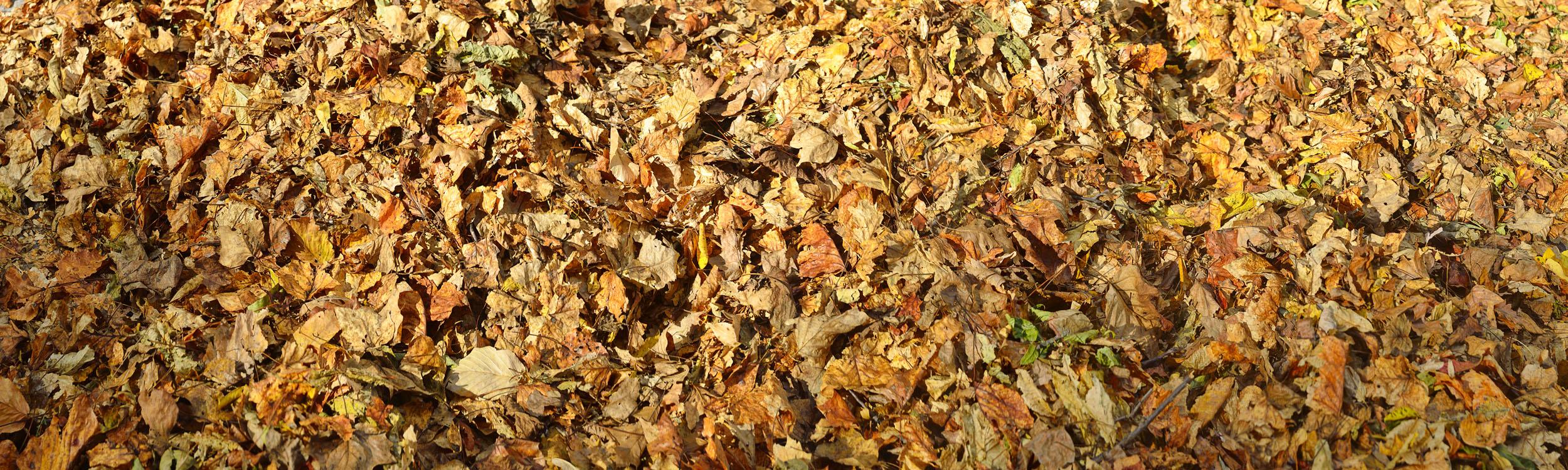 Autumn Leaves, North Carolina
