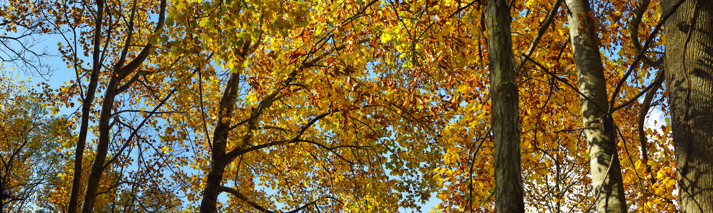 Fall Folliage, North Carolina