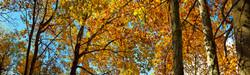 Fall Folliage, NC
