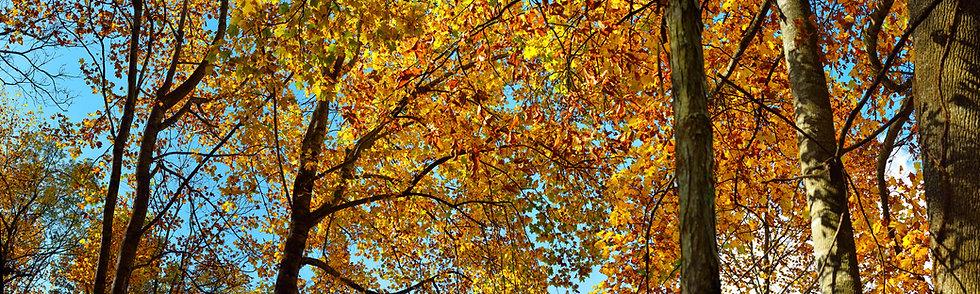 Fall Foliage, North Carolina