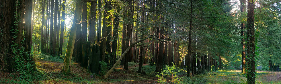 Forest Clearing, CA