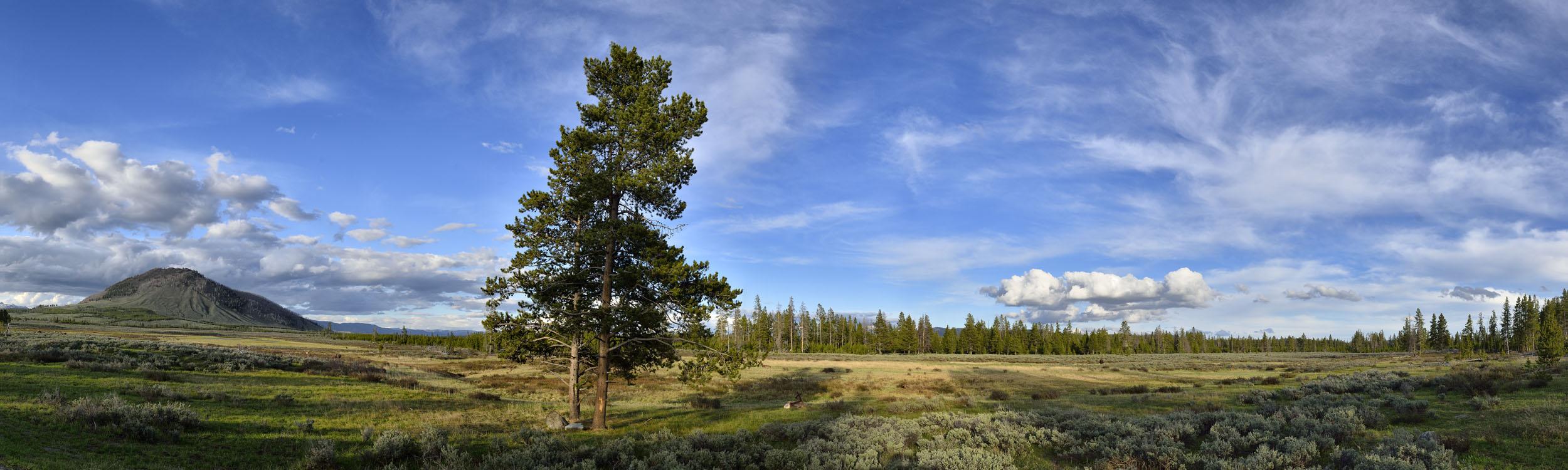 Meadow in Gallatin Range