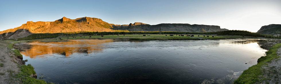 Spring Bison along the Madison River