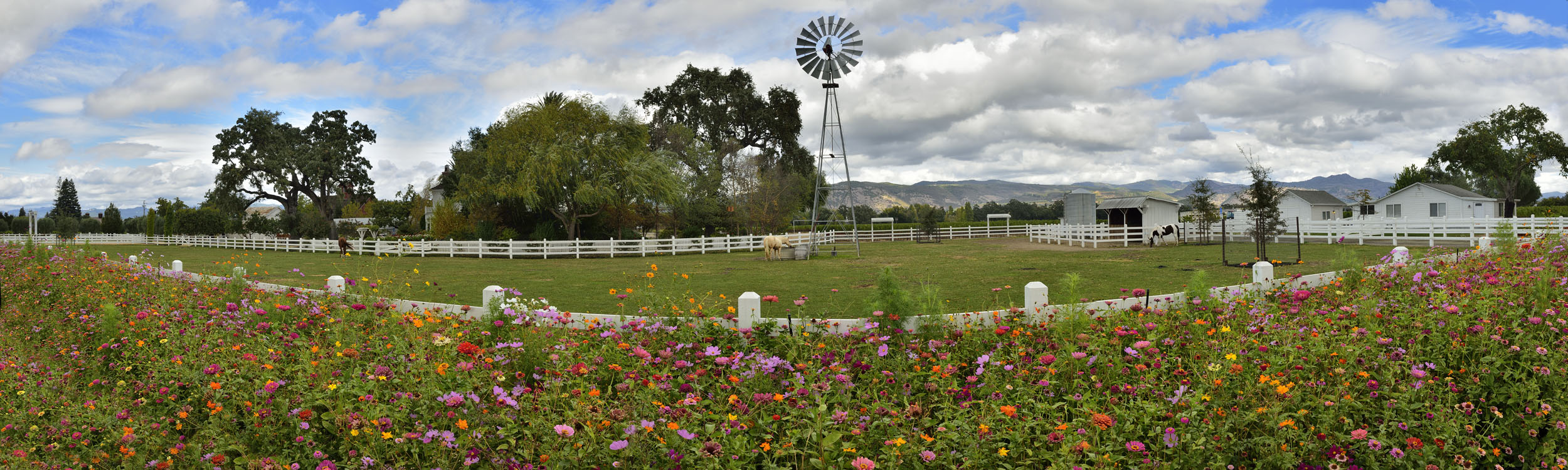 Horse Corral in Napa Valley
