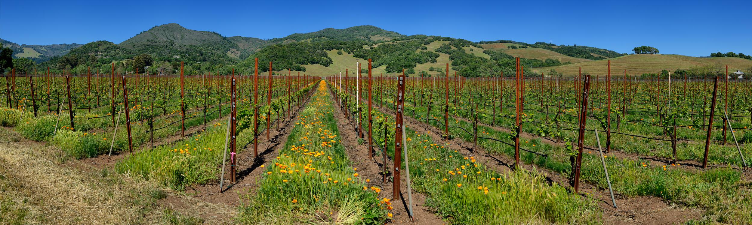 Flowers in Vineyard