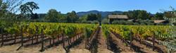 Vineyard near St. Helena, CA