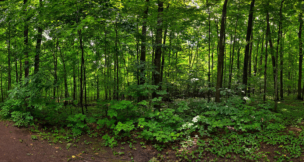 Forest #1 in Cooper Falls, Wisconsin